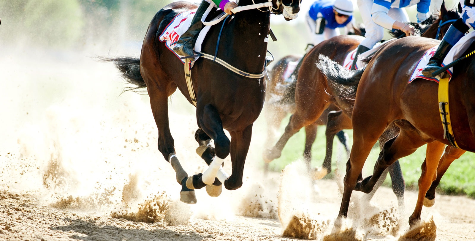 sponsoring-horses